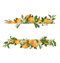 Template frame decprative element with citrus vector
