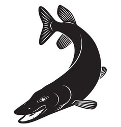 pike vector image