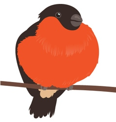 Bullfinch on Branch Isolated vector image
