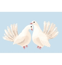 Couple of white doves vector