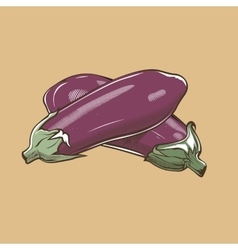 Eggplants in vintage style Colored vector image