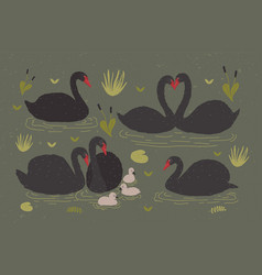 flock of black swans and brood of cygnets floating vector image