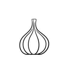 garlic head hand drawn sketch icon vector image