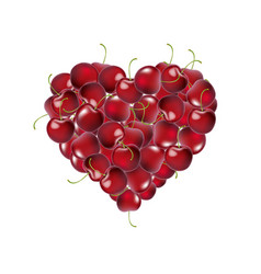 heart from cherry vector image