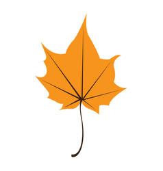 orange maple leaf isolated on white background vector image