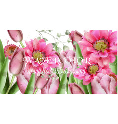 spring daisy flowers and tulips background vector image