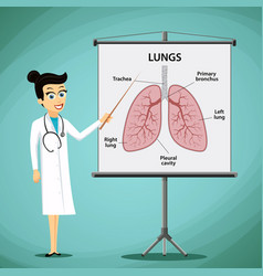 Woman doctor shows on the blackboard human lungs vector