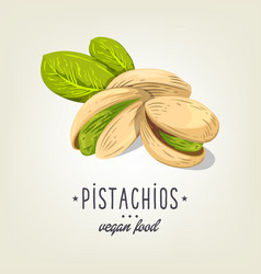 pistachios icon isolated on background vector image