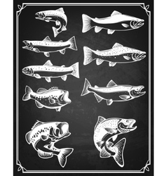 Set of trout salmon and perch fish icons on vector image