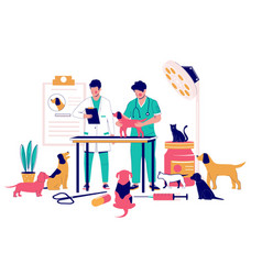 veterinary clinic services flat style vector image