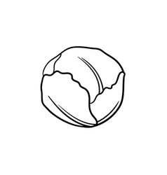 white cabbage hand drawn sketch icon vector image
