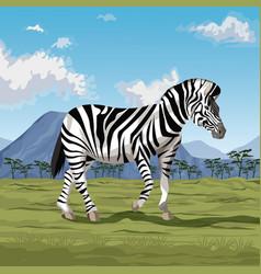 zebra on savannah vector image