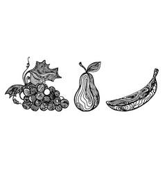 fruit lines vector image