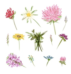Set of garden flowers sketch for your design vector image