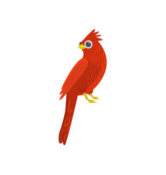big red sitting cardinal-bird isolated on white vector image