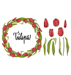 floral circle frame with tulips and elements vector image