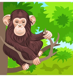 Funny monkey chimp in the jungle vector