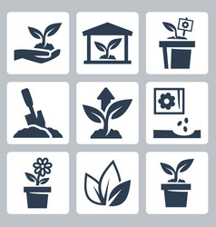 Plant growing icons set vector