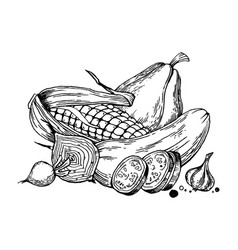 Still life vegetable engraving vector
