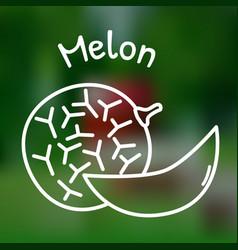 Thin line melon icon vector