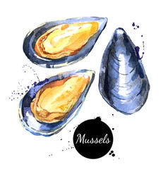 Watercolor hand drawn fresh mussels Isolated vector