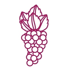 contour purple line with bunch grapes vector image