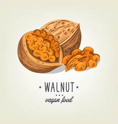 Colourful walnut icon isolated on background vector