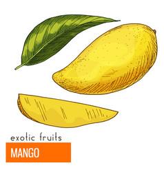 mango color vector image