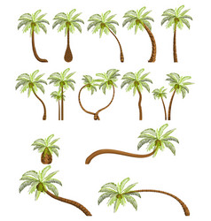 Palm trees isolated on white background beautiful vector