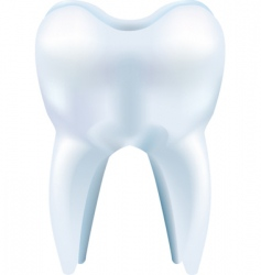 Tooth illustration vector