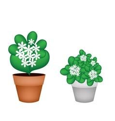 Two White Jasmine Flowers in Flower Pot vector image