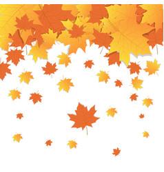 autumn background yellow maple leaves fall season vector image
