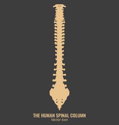 human spine column vector image