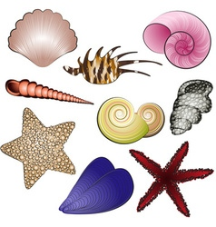 Beach Seashells and Starfish Set vector