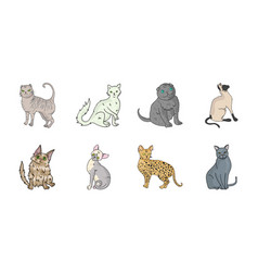 Breeds of cats icons in set collection for design vector