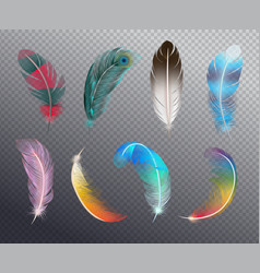 Color feathers realistic set vector