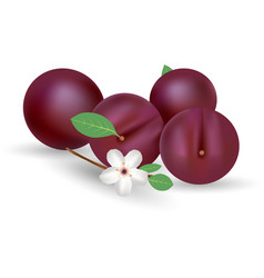 Composition of several plums purple plum vector