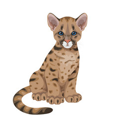 Cougar cub isolated vector