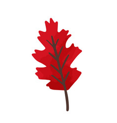 flat cartoon bright red oak vector image