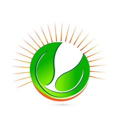 green leafs around the sun icon vector image