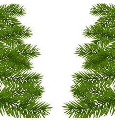 Green lush branch of spruce with the two sides vector
