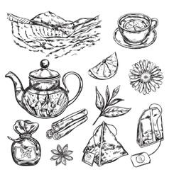 Herbal Tea Teapot vector