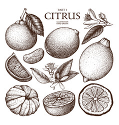 ink hand drawn citrus plants sketch vector image
