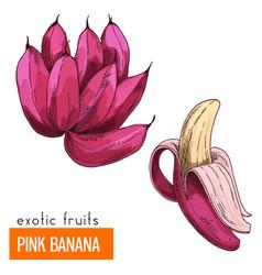 pink banana color vector image