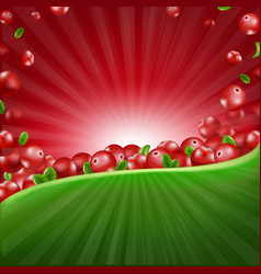 red cranberry border vector image