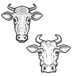 set cow heads on white background design vector image