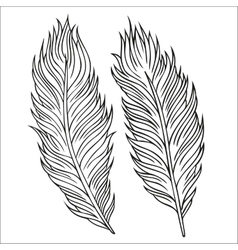 Vintage Feather set Hand-drawn vector image