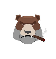 angry bear with cigar aggressive grizzly isolated vector image