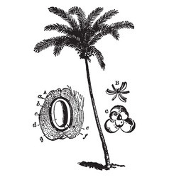 Coconut tree vintage vector