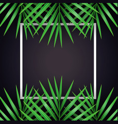 Palm leaf macarthurs palm background with white vector